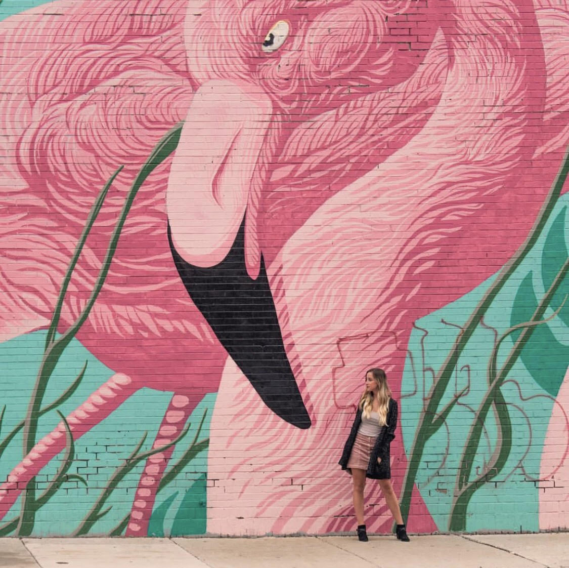 Flamingo Wall in Chicago